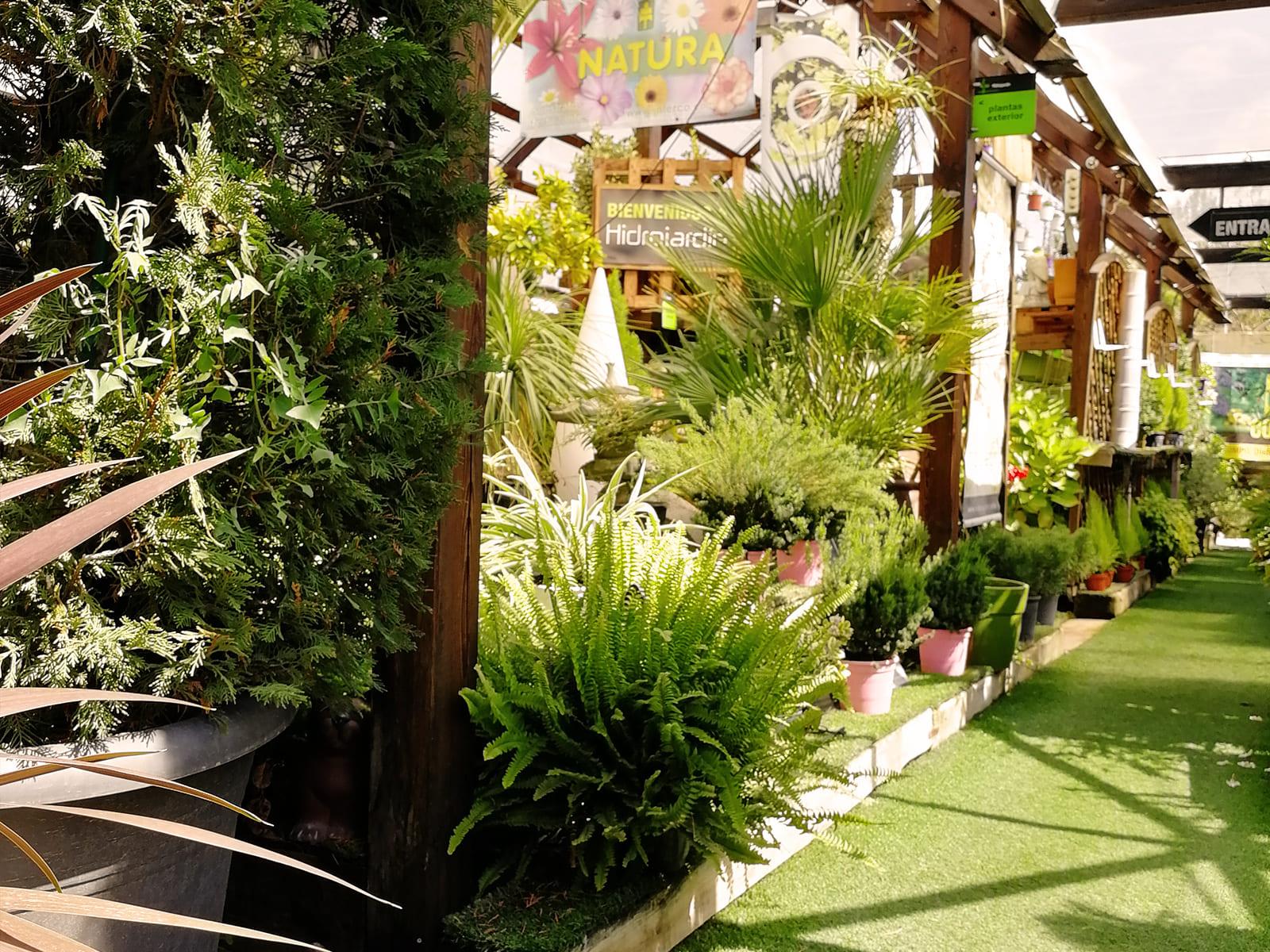 centro-jardineria-garden-invernadero-artesanal-madera-fuente-13_HIDROJARDIN-Bañeres