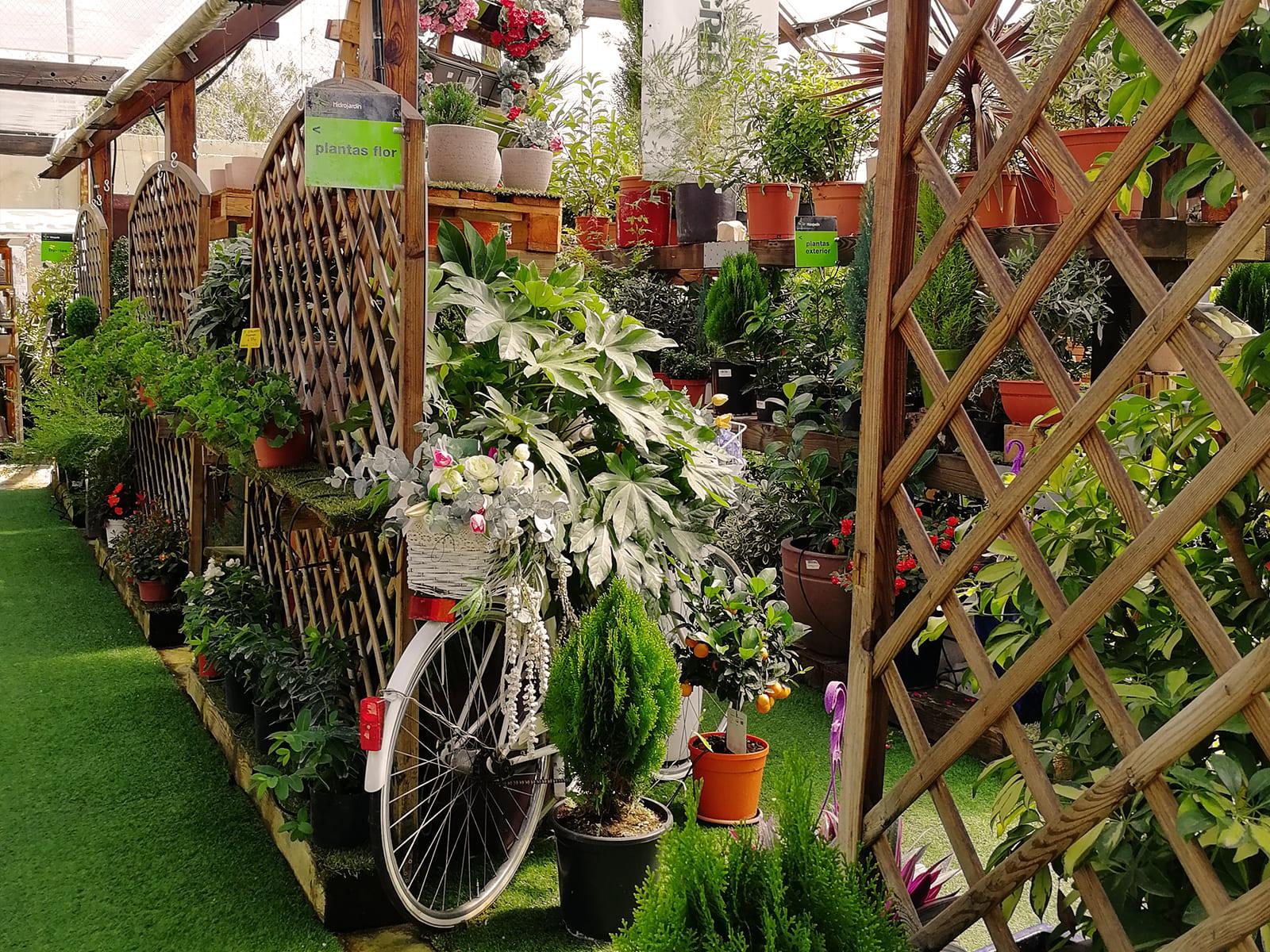 centro-jardineria-garden-invernadero-artesanal-madera-fuente-14_HIDROJARDIN-Bañeres