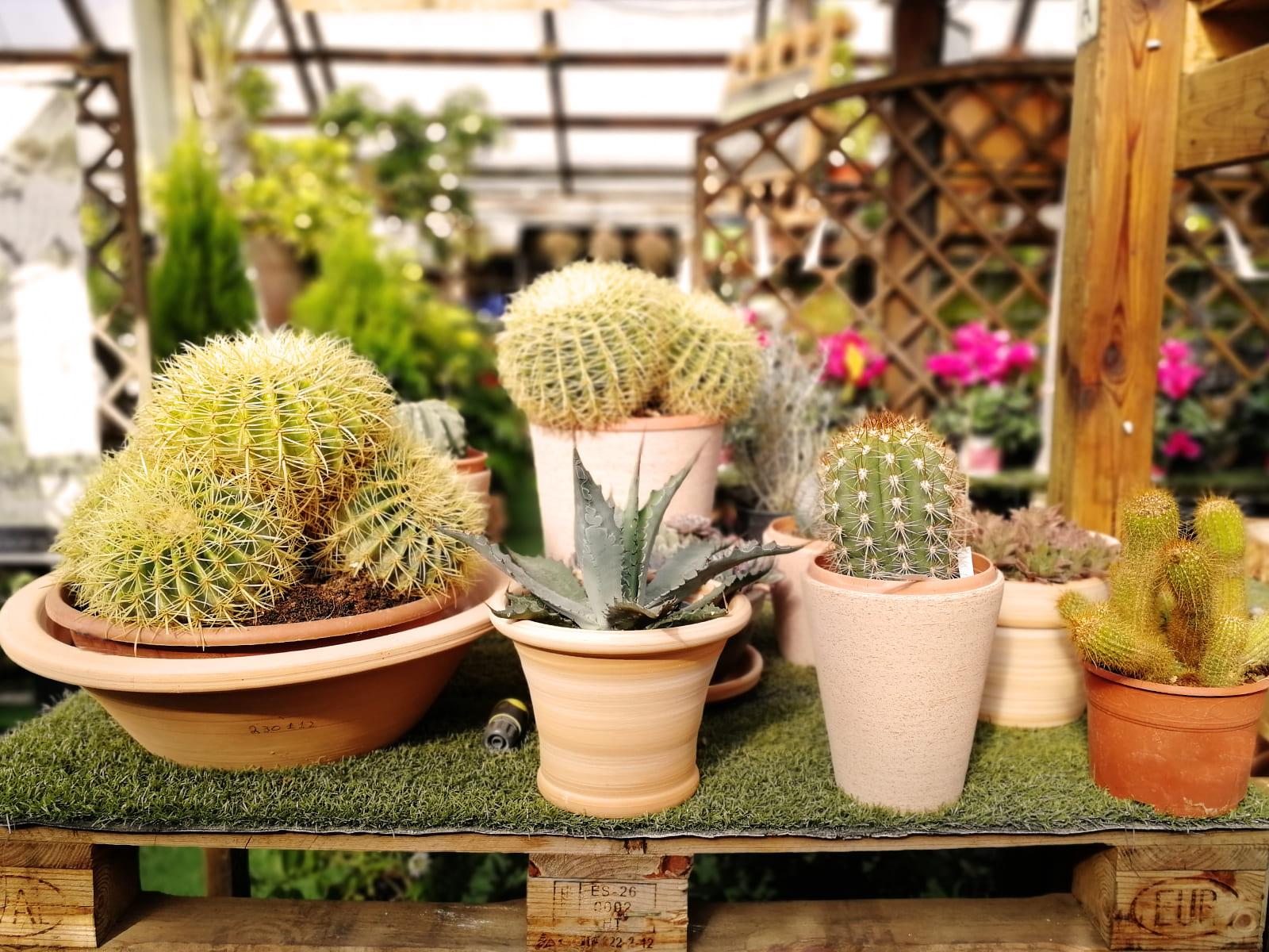 centro-jardineria-garden-invernadero-artesanal-madera-fuente-16_HIDROJARDIN-Bañeres