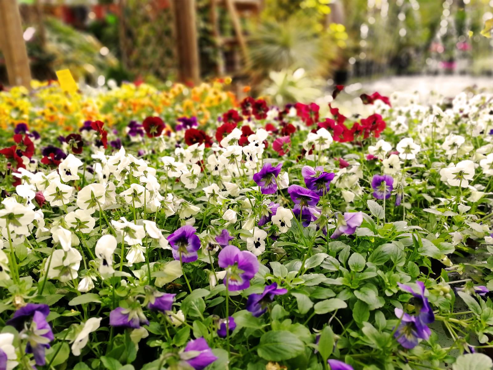 centro-jardineria-garden-invernadero-artesanal-madera-fuente-18_HIDROJARDIN-Bañeres