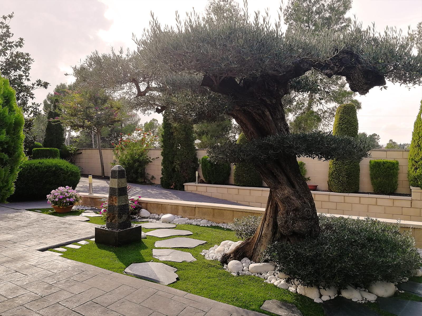 diseño-jardines-espacio-olivo-MM-02_HIDROJARDIN-Bañeres