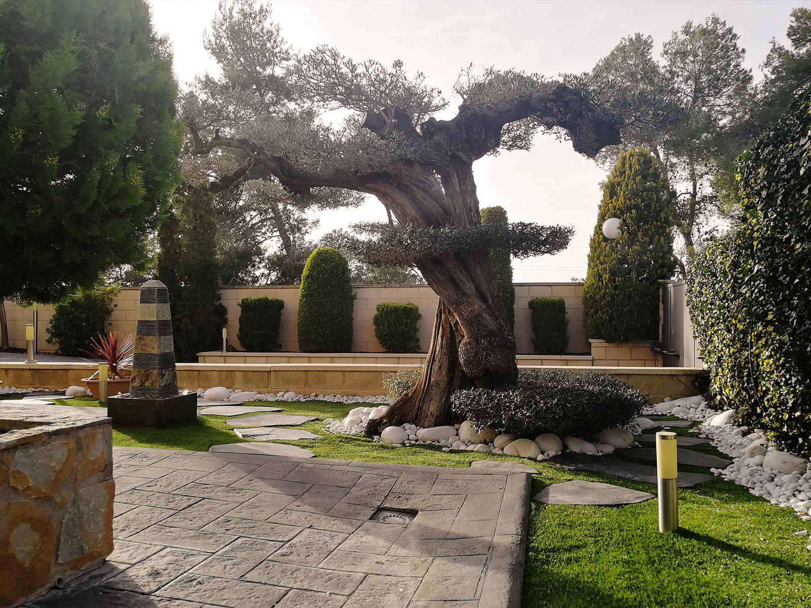 diseño-jardines-espacio-olivo-MM-04_HIDROJARDIN-Bañeres