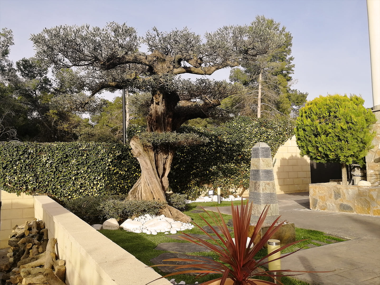 diseño-jardines-espacio-olivo-MM-05_HIDROJARDIN-Bañeres