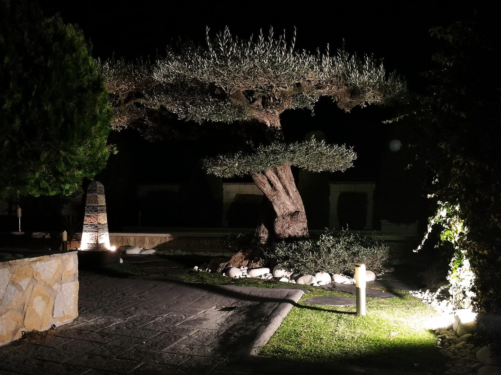 diseño-jardines-espacio-olivo-noche-MM-06_HIDROJARDIN-Bañeres