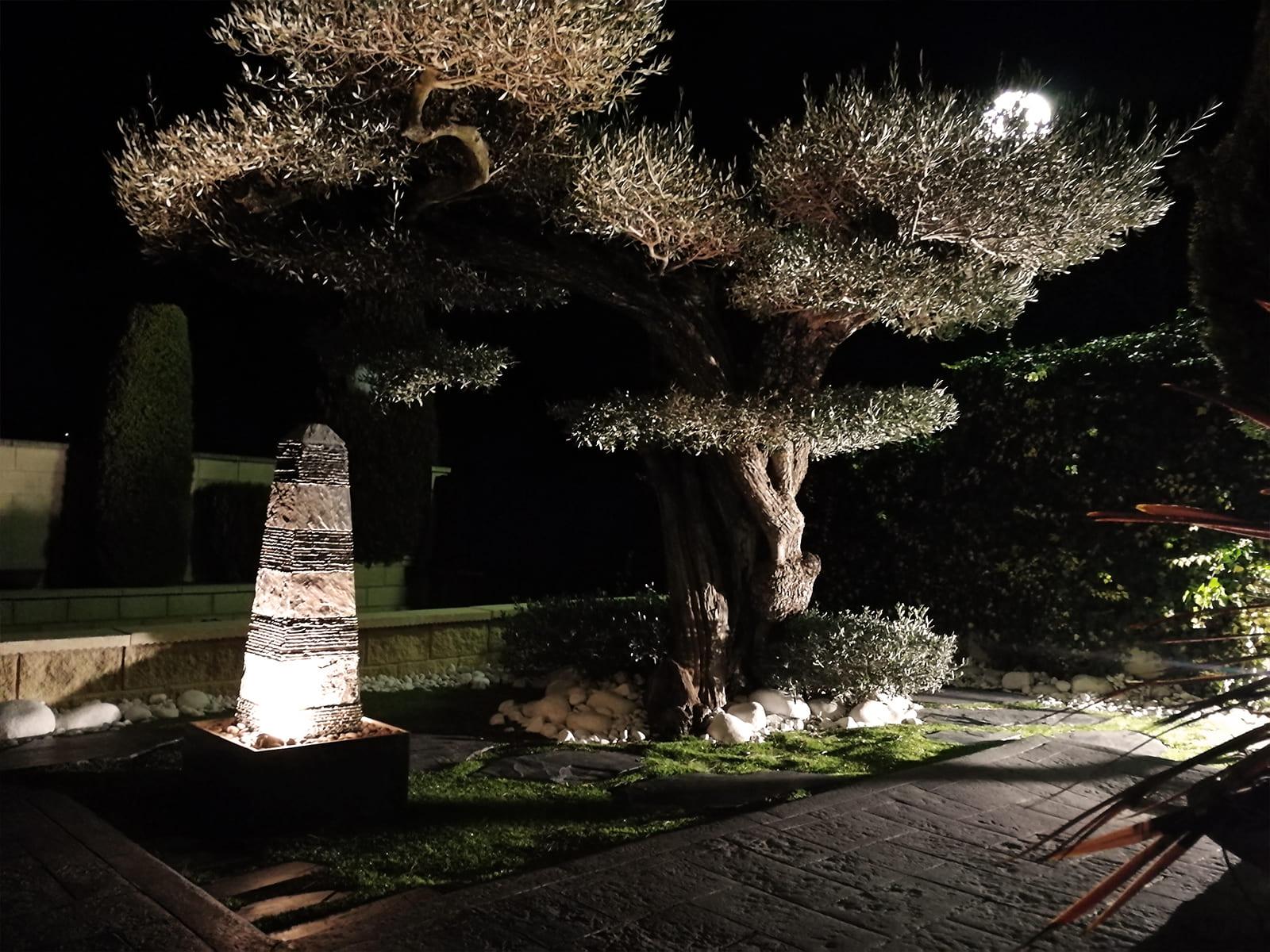 diseño-jardines-espacio-olivo-noche-MM-07_HIDROJARDIN-Bañeres