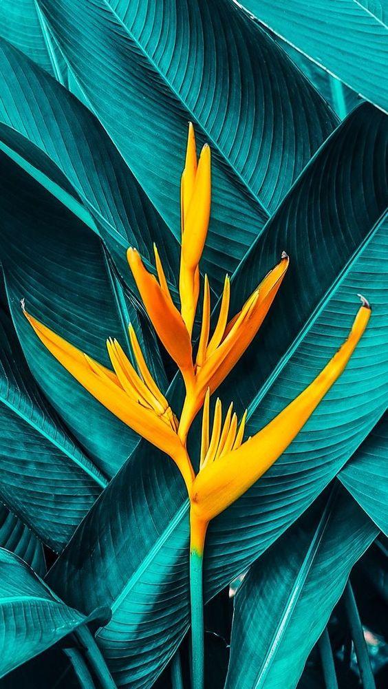 flores-color-naturaleza-02_HIDROJARDIN-Bañeres