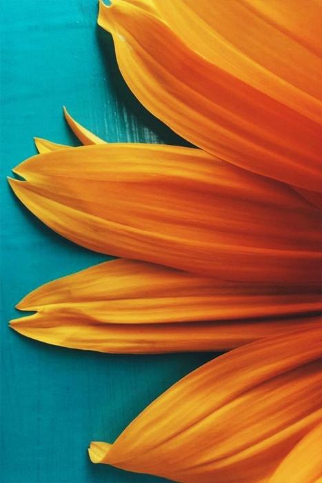 flores-color-naturaleza-03_HIDROJARDIN-Bañeres