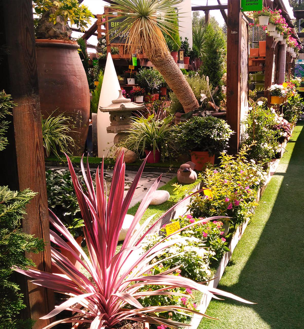centro-jardineria-garden-invernadero-artesanal-madera-fuente-23_HIDROJARDIN-Bañeres