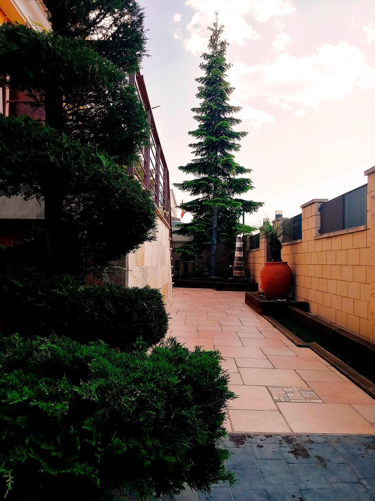diseño-jardines-palmeras-abeto-LF-02_HIDROJARDIN-Bañeres