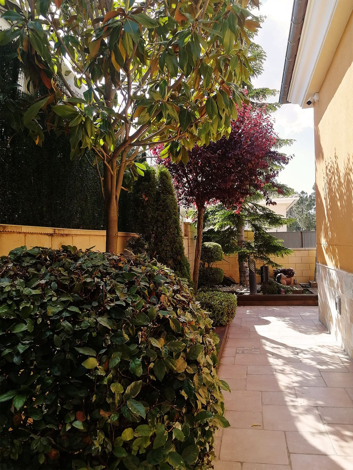 diseño-jardines-palmeras-abeto-LF-04_HIDROJARDIN-Bañeres