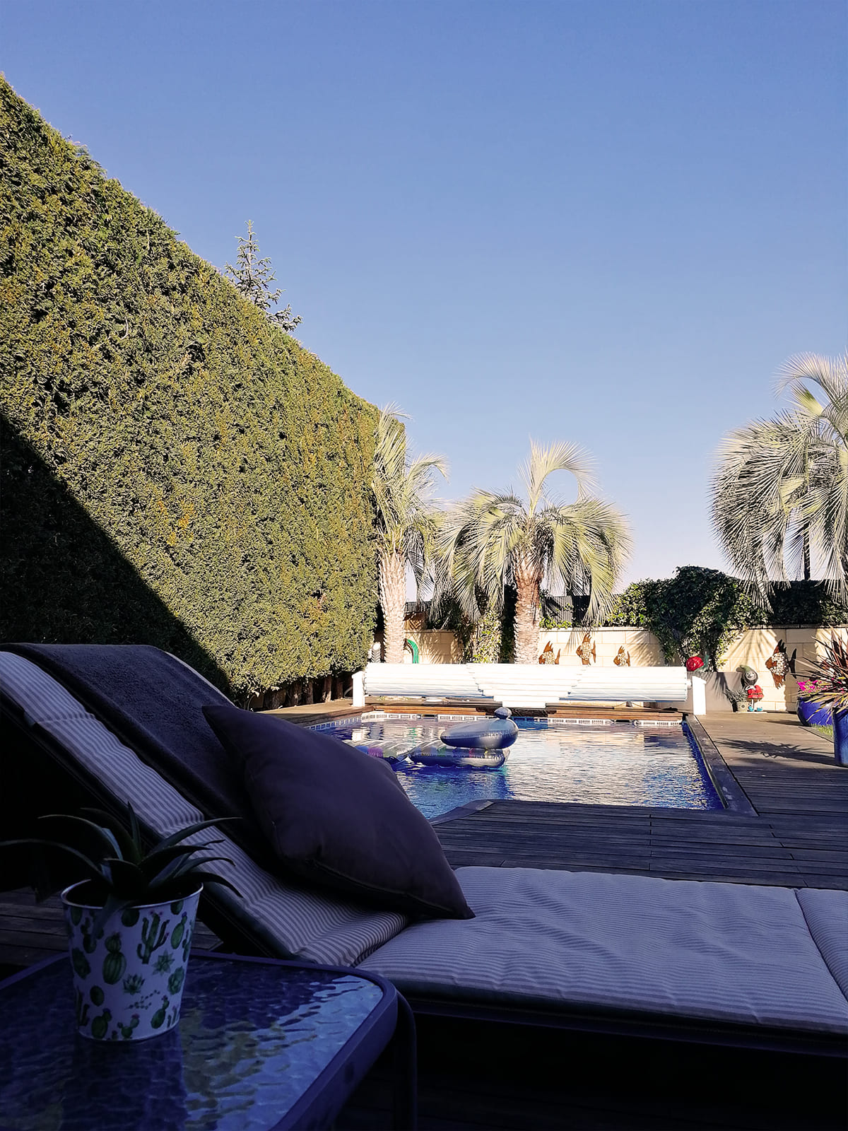 diseño-jardines-palmeras-abeto-LF-05_HIDROJARDIN-Bañeres