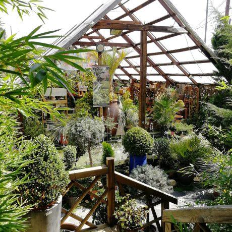centro-jardineria-garden-invernadero-artesanal-madera-fuente-19_HIDROJARDIN-Bañeres