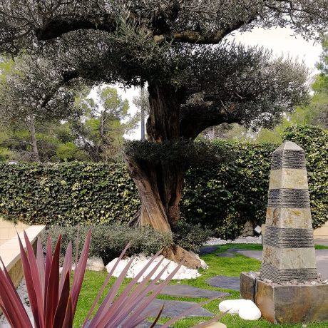 diseño-jardines-espacio-olivo-MM-01_HIDROJARDIN-Bañeres